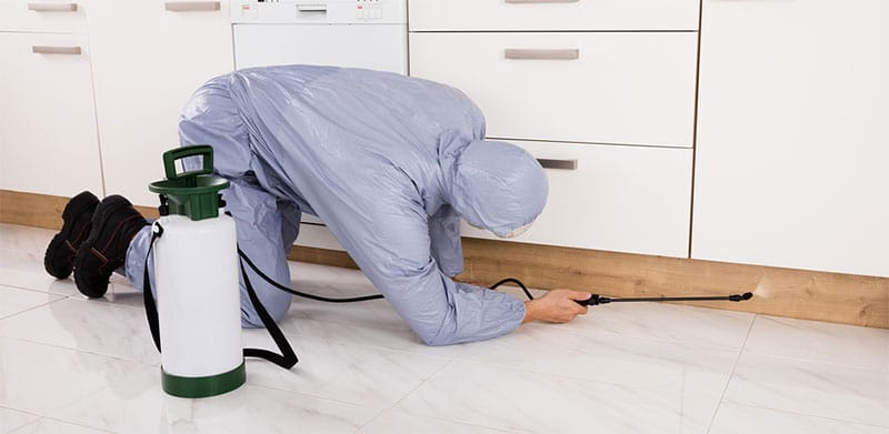 Exterminator fumigating Brisbane home