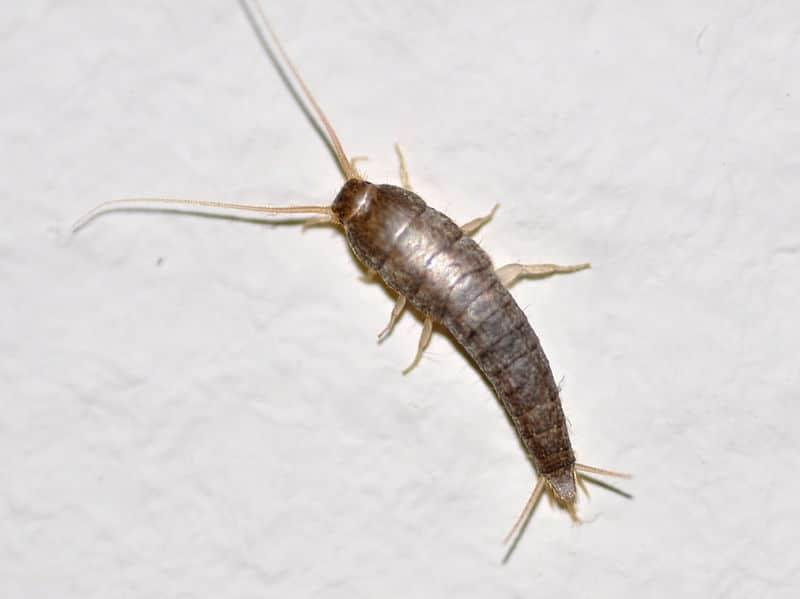 cockroach01